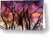 Colorful Silhouetted Trees 27 Greeting Card