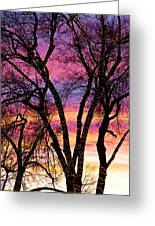 Colorful Silhouetted Trees 33 Greeting Card
