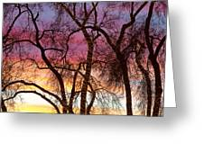 Colorful Silhouetted Trees 37 Greeting Card