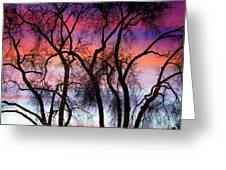 Colorful Silhouetted Trees 9 Greeting Card