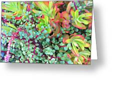Colorful Succulent Plants For You Greeting Card