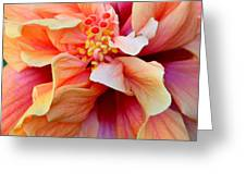 Coloring Book Hibiscus Greeting Card
