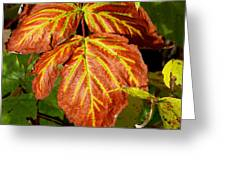 Colors And Veins Greeting Card