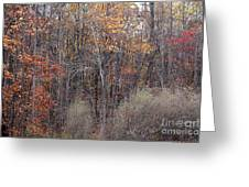 Colors Galore Greeting Card