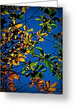 Colors Of The Autumn Elm Greeting Card