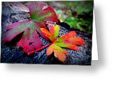 Colors Of The Autumn Forest Greeting Card