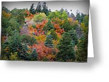 Colors Of The Sandia Forest Greeting Card