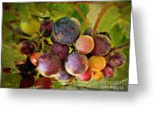 Colors Of Wine Greeting Card by Kevin Moore