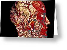 Colour Artwork Of Nerve & Blood Supply Of Head Greeting Card