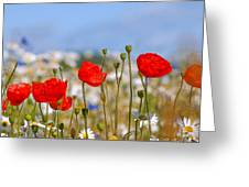 Colour Of Summer Greeting Card