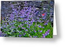 Colour Purple Greeting Card