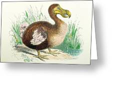 Coloured Engraving Of A Dodo Greeting Card