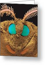Coloured Sem Of The Head Of A Silk Moth, Bombyx Sp Greeting Card