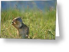 Columbia Ground Squirrel Feeding Greeting Card