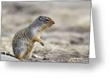 Columbian Ground Squirrel, Banff Greeting Card