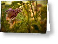 Columbine - Flower Of Spring Greeting Card