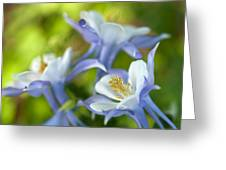 Columbine-1 Greeting Card