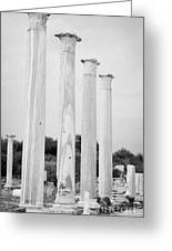 Columns In The Central Courtyard And Stoa Gymnasium And Baths In The Ancient Site Of Salamis Greeting Card by Joe Fox