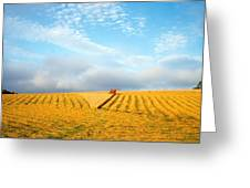 Combine Harvesting A Wheat Field Greeting Card