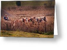 Combining Soybeans Greeting Card