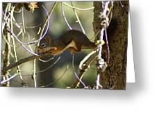 Comfy In A Tree Greeting Card