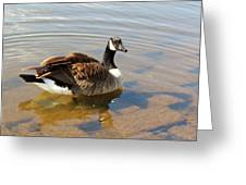 Coming On Shore Greeting Card