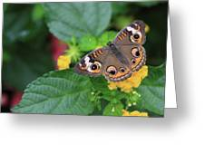 Common Buckeye II Greeting Card