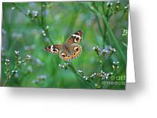 Common Buckeye Greeting Card by Kathy Gibbons