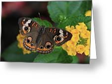 Common Buckeye Greeting Card