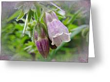 Common Comfrey - Symphytum Officinale Greeting Card
