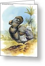 Common Dodo Greeting Card