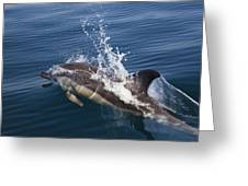 Common Dolphin Delphinus Delphis Greeting Card