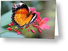 Common Lacewing Greeting Card