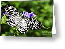 Common Mime Greeting Card