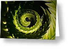 Common Polypody Swirl Greeting Card
