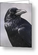 Common Raven, Jasper National Park Greeting Card