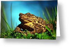 Common Toad Greeting Card