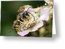Common Wasp Feeding On A Flower Greeting Card