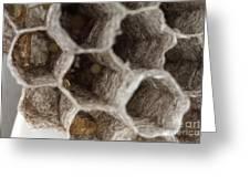 Common Wasp Larva Greeting Card