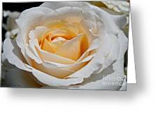 Common Wealth Glory Rose Greeting Card