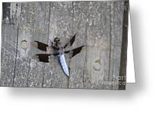 Common White Tail Dragonfly Greeting Card