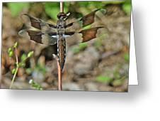 Common Whitetail Dragonfly - Plathemis Lydia - Female Greeting Card