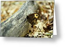 Common Wood-nymph Greeting Card