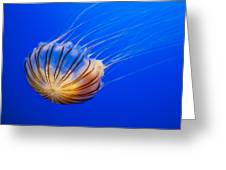 Compass Jellyfish Greeting Card