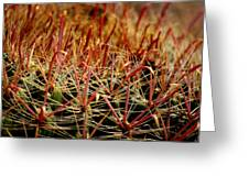 Complexity Of Nature Greeting Card