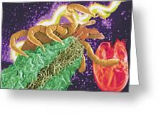 Composite Image Of A Tick And A Borrelia Bacterium Greeting Card