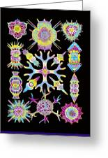 Computer Art Of Radiolarians (from Ernst Haeckel) Greeting Card