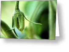 Conception Of A Roma Tomato - On The Vine Square Greeting Card
