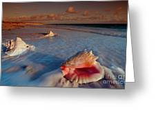 Conch Shell On Beach Greeting Card