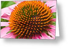 Cone Flower 7 Greeting Card